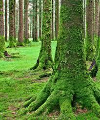 plinky tree